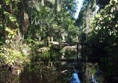 Pădurea Amazoniană