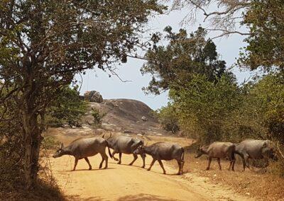 Parcul national Ruhuna